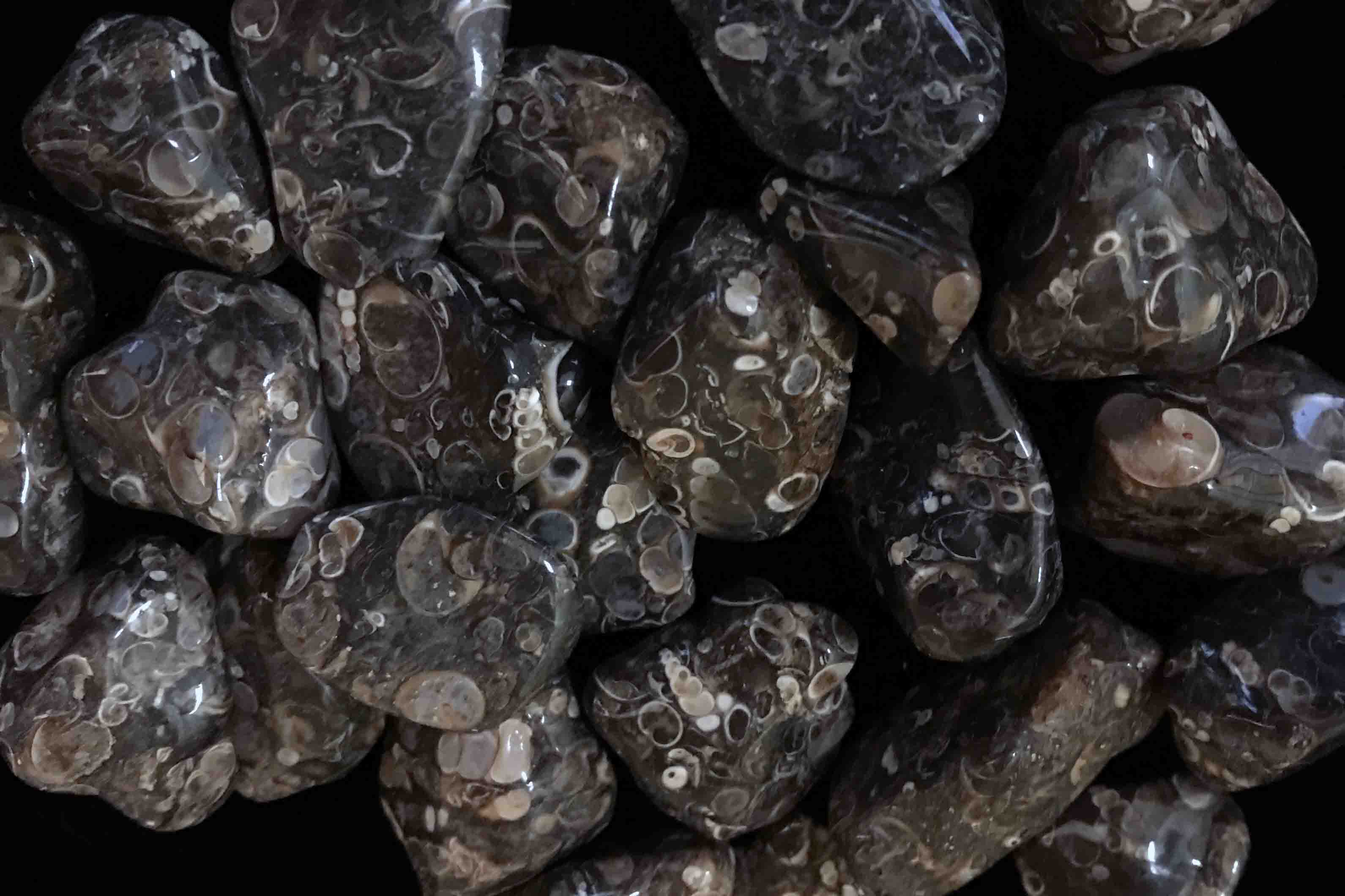 Tumbled Turritella Agate